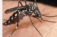 khas nyamuk jika menggigit tidak nungging